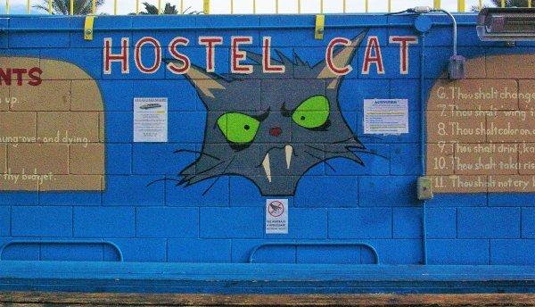 Las Vegas Hostel Cat for cat lovers