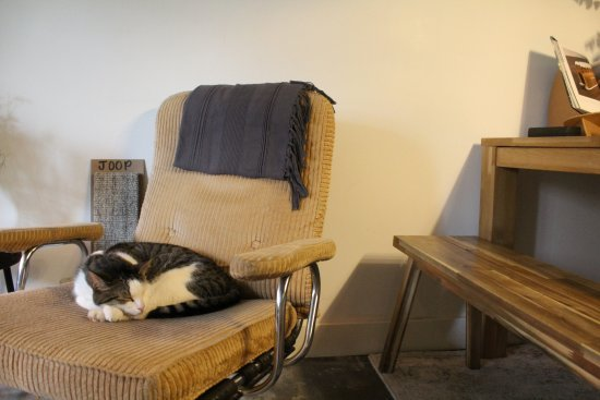 Cocomama Amsterdam for cat lovers