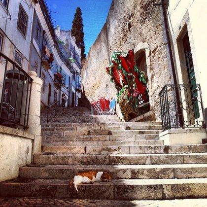 Lissabon, katt på en trappa (big)